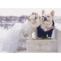 Image of Puppy Love Card