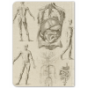 image of Anatomy Hardcover Dot Journal back