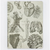 image of Anatomy Hardcover Dot Journal front