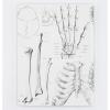image of Skeleton Hardcover Lined/Grid Journal back