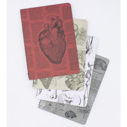 image of Anatomy 4-Pack Softcover Asst Journal covers