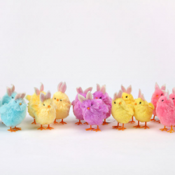 Image of Colorful Chicks with Bunny Ears